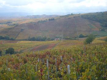 Route des vins dans le Beaujolais