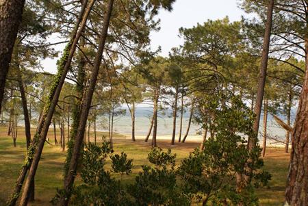 La cabane au bord du lac à Biscarosse
