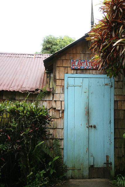 Plantation à Sainte-Lucie