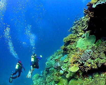 Snorkeling et plongée à Sainte-Lucie