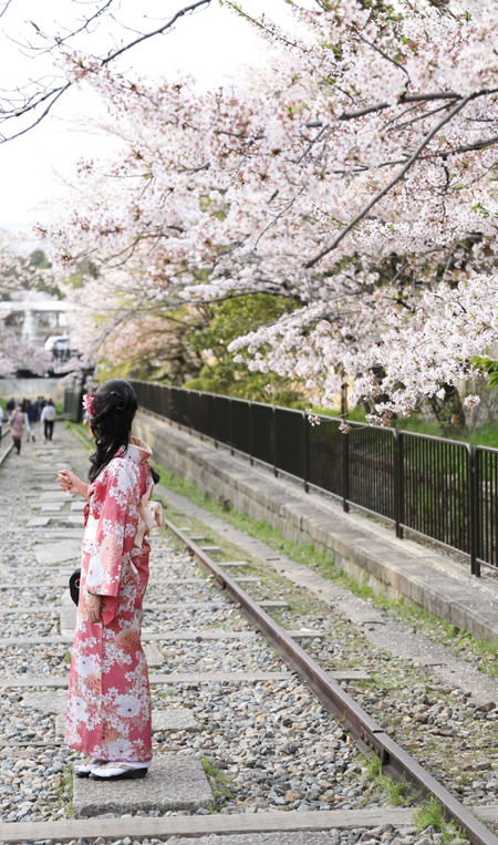 Japanese girl - cherry blossom