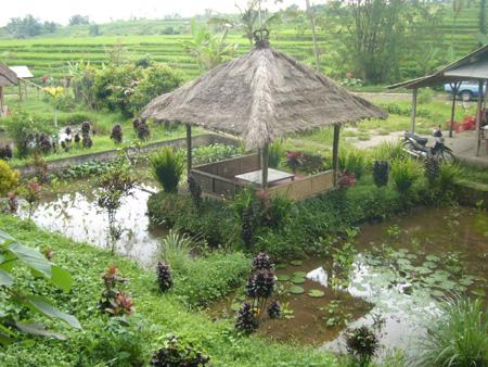 rizières à Bali