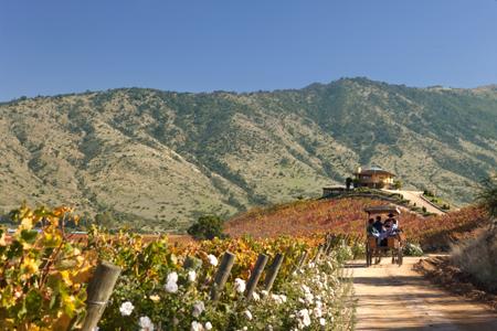 Route des vins Vallée de Colchagua