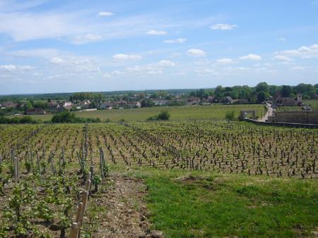 Vignoble Clos de Vougeot