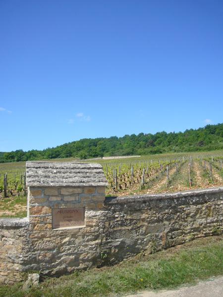 Vignoble Musigny Bourgogne