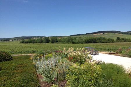 vue sur les vignes de Meursault