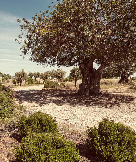 Pensão Agrícola à Tavira