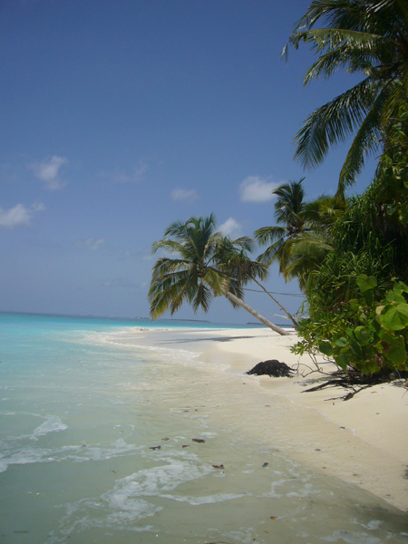 plage Coco Palm