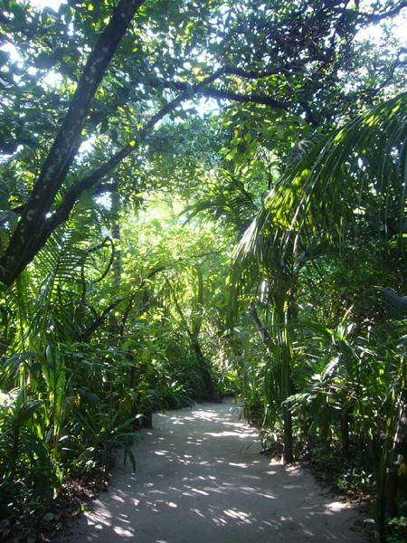 Sentier Coco Palm