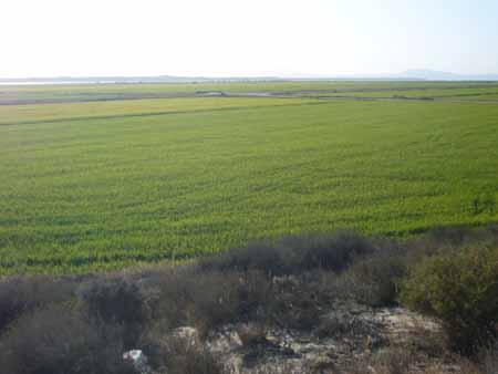 Comporta, estuaire du Sado