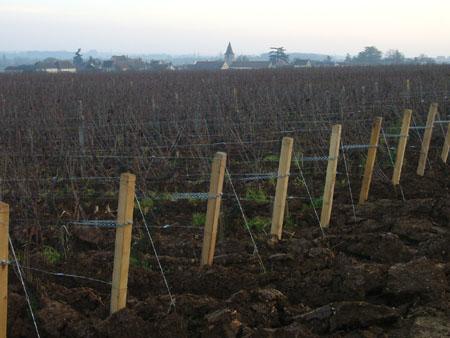 vignes Vosne-Romanée