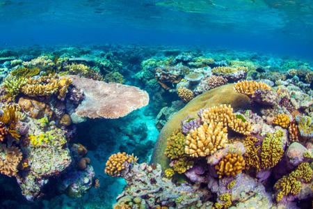 Grande Barrière de Corail, dans le Queensland en Australie