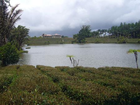 Bois Chéri, île Maurice