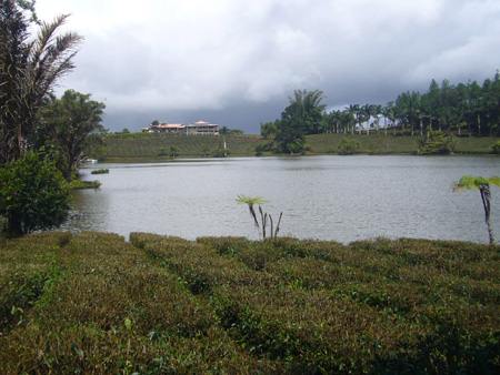 Bois Chéri à l'île Maurice