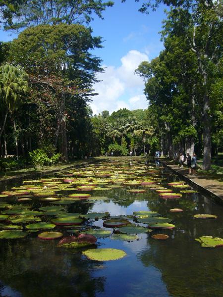 jardin botanique de Pamplemousses à l'île Maurice