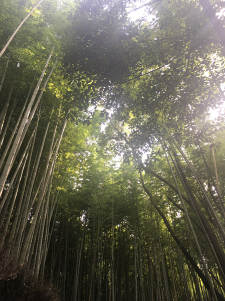 Temple Tenryu-ji à Kyoto