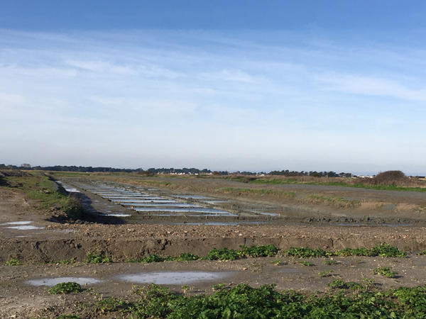 Marais salants de Noirmoutier